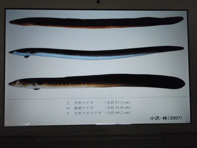 Three Types of Eel